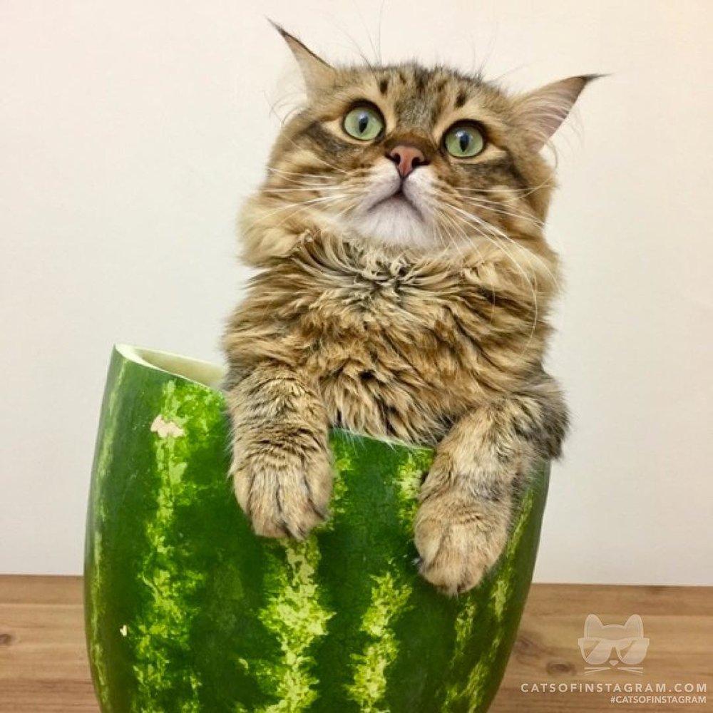 Instagram/cats_of_instagram