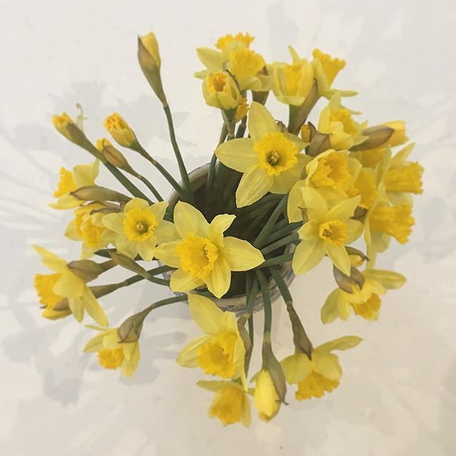 ~{ Spring }~ . . Whenever I go home to Yorkshire, I love seeing my ceramics in use! This is a vase I made in 2012, I wasn't keen but Mum loved it and whenever I come back home it is always in use!! (I still don't really like it - which is why I'm focusing on the daffs instead!) #pottery #instapottery #potterylove #potsinaction #ceramic #ceramics #keramik #wheelthrown #wheelthrownpottery #poterie #potery #wip #inmystudio #wearethemakers #makersgonnamake  #handmadeisbetter #modernceramics #bristol #craft #craftsmanship #makersmovement #maker #livefolk #kinfolk #bristolmaker  #cakestand #lemon
