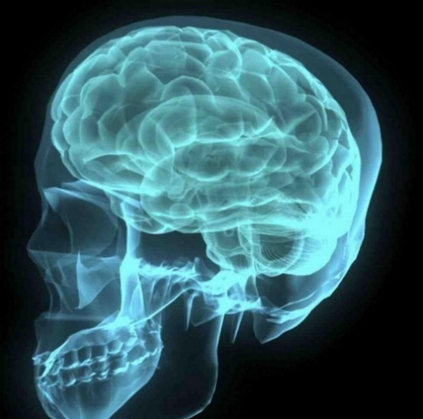 brain-001-1172516-1919x1184.jpg
