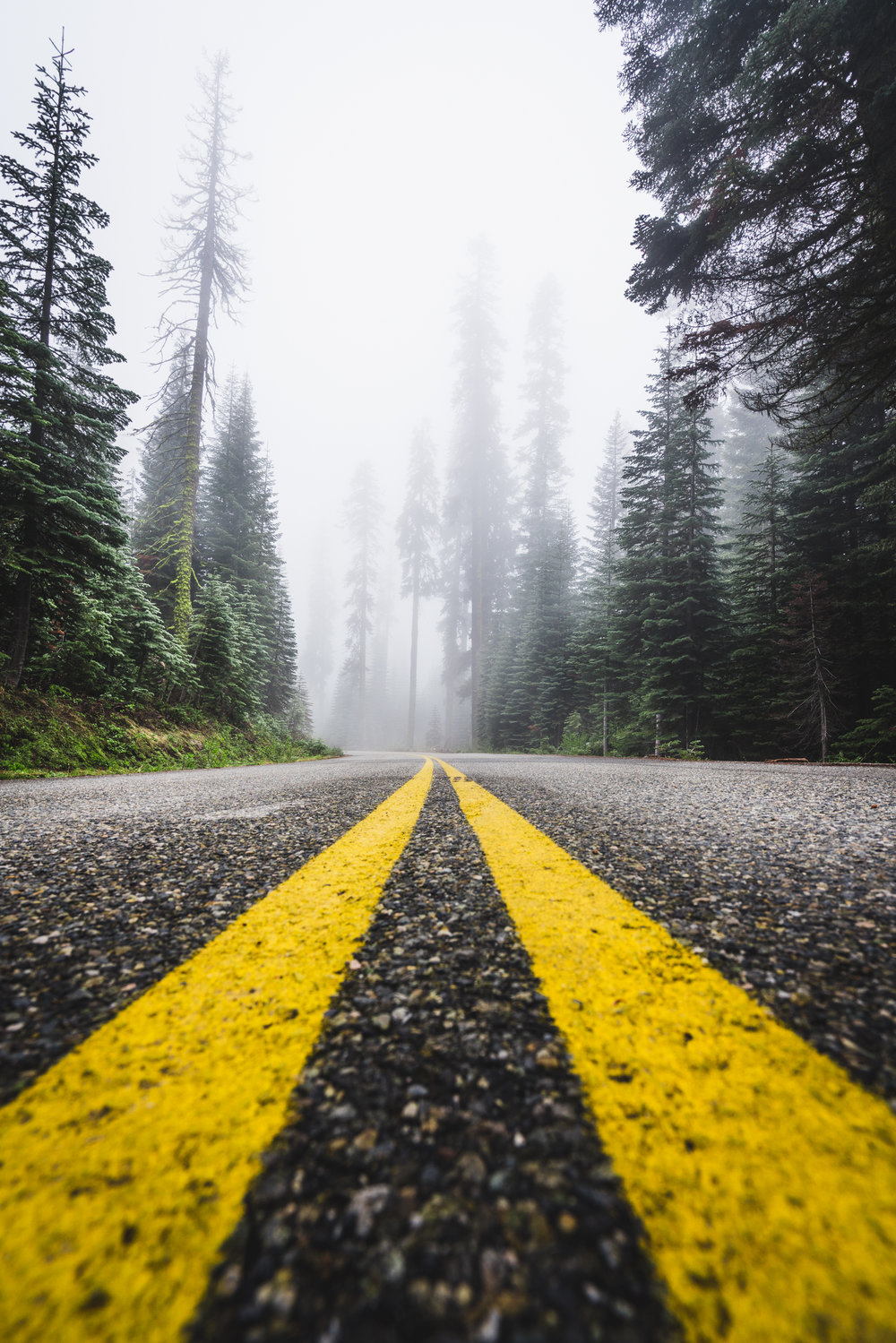 Road, Sierra national forest, blog, hiking, fog, california