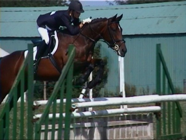 Performance showjumping horse osteopathy