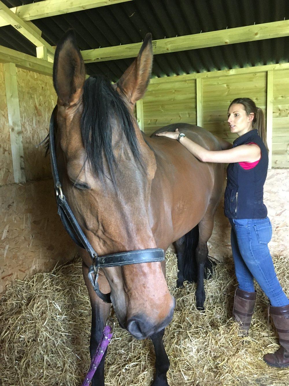 Equine cranial treatment