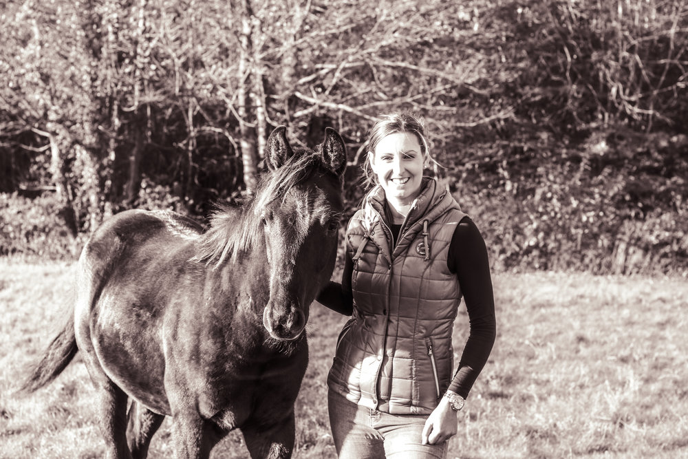 Young horse osteopath
