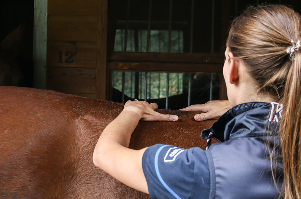 equine back health osteopath