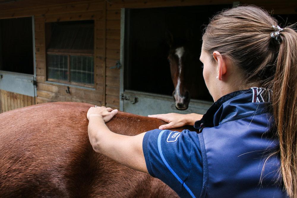Equine sacro-iliac treatment