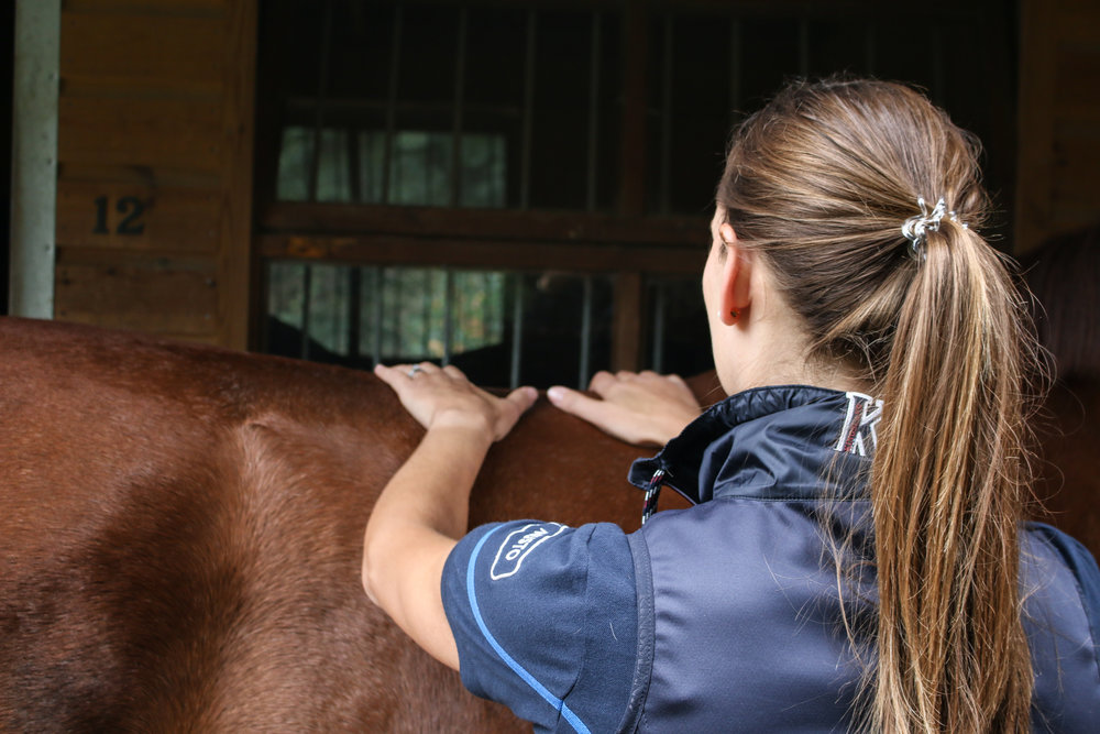 Thoracic equine back treatment