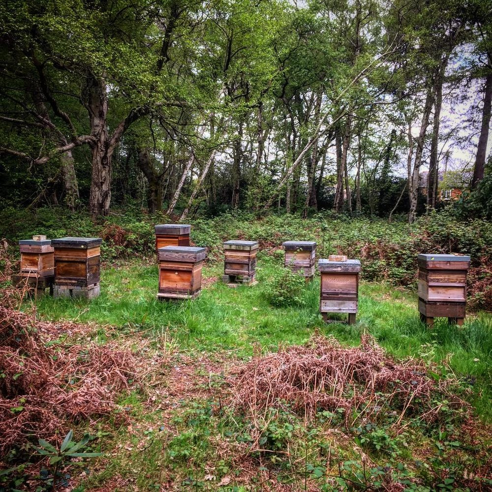 Some of the hives in the woods.