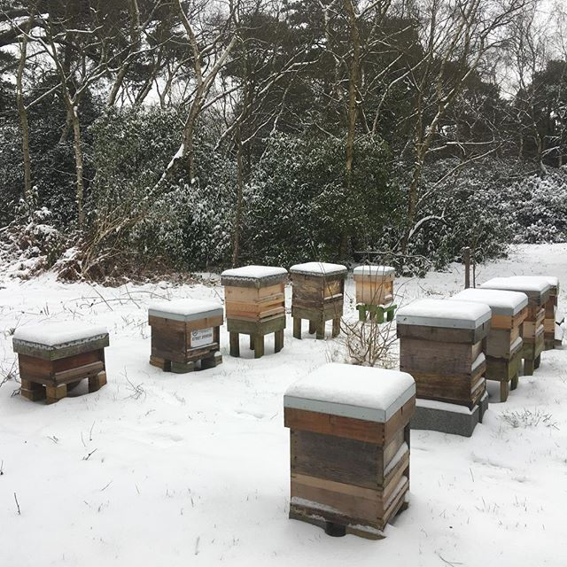 Hives in the snow.