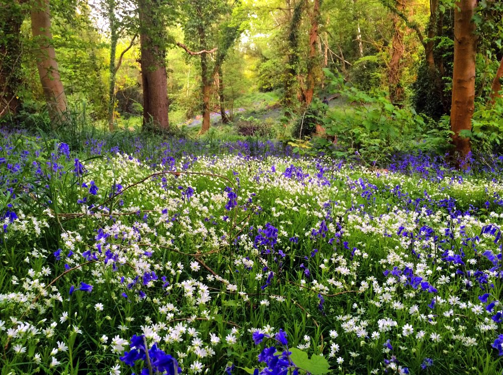 The Blue Bells.