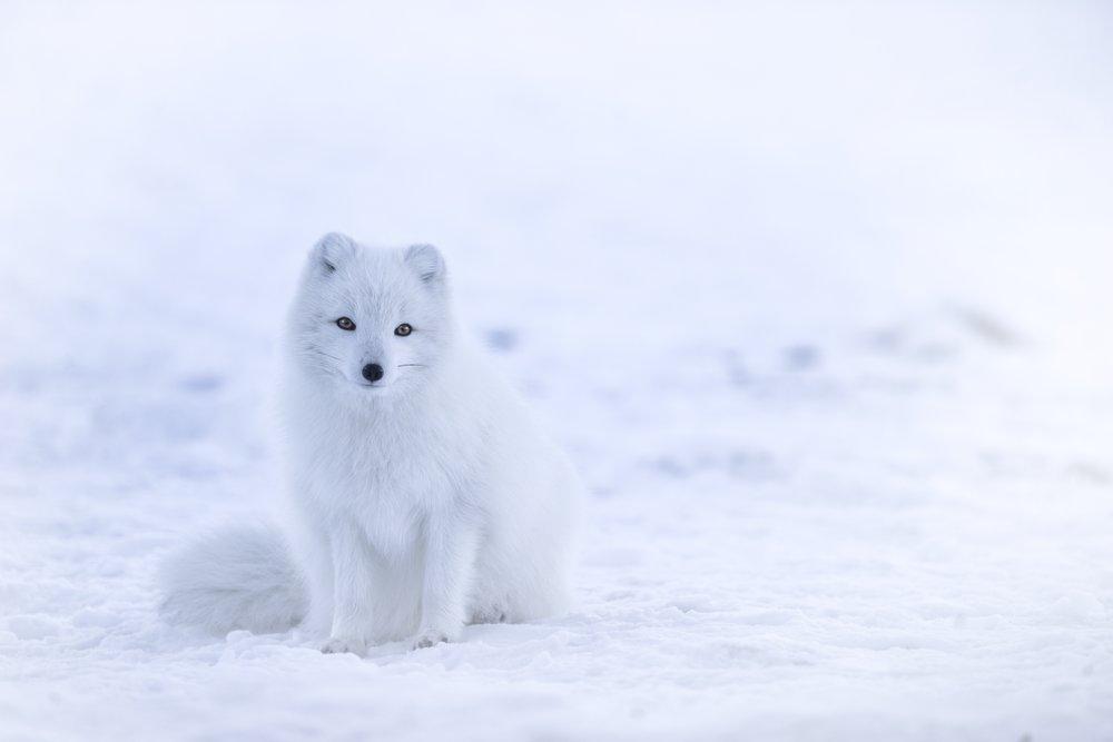 spitalfields-bans-fur