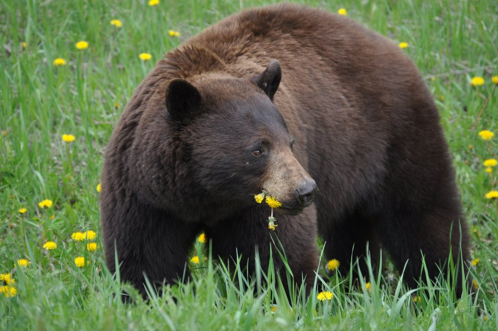 ban-bear-bile