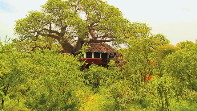 treetops exterior.jpg
