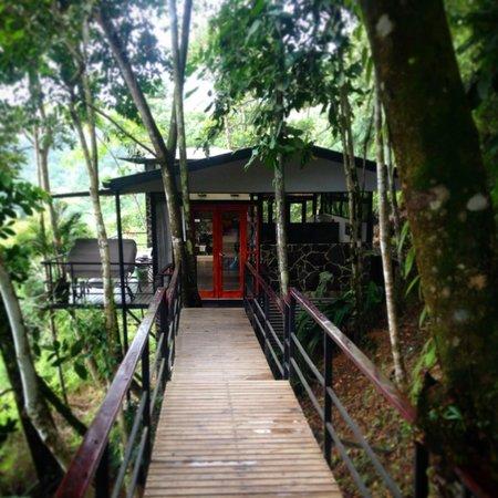 treehaus entrance.jpg