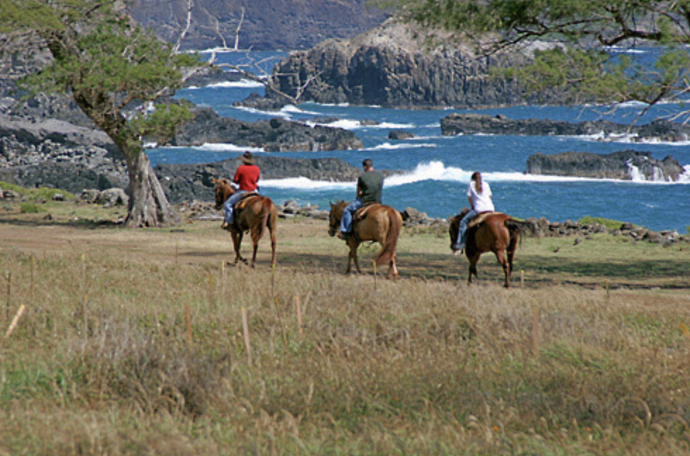 Jun 22:Horseback riding in West Mauiexplore west maui - Your journey begins at the Mendes Ranch Corral, where you'll be greeted by paniolos. Then, hop on your tame, gentle horse and follow your guides on a 1.5-hour trail ride!8:45am Departure:On your morning ride, canter up rolling pastures and down the edge of Waihee Valley to the coastline, where you'll view the magnificent Pacific waters. Here, your guides will take photos of you with the majestic seascape in the background. You'll then head back up to the corral.11:30am or 12:15pm Departure:On your afternoon ride, ride up into the mountains to the edge of a lush ravine at a 2,500 foot (762-meter) elevation. Here, you'll see some of Maul's largest waterfalls in the distance.Ride down along the edge of Waihee Valley, through taro patches and past plantation homes, before returning to the corral.Then, enjoy some of the nearby towns in West Maui!WailukuWailuku's vintage architecture, antiques shops, and mom-and-pop eateries imbue the town with charm. You won't find any plastic aloha in Wailuku; in fact, this is the best place to buy authentic Hawaiian souvenirs.LahainaLahaina's merchants and art galleries go all out from 7 to 10pm every Friday, when Art Nightbrings an extra measure of hospitality and community spirit. The Art Night openings are usually marked with live entertainment and refreshments, plus a livelier-than-usual street scene.
