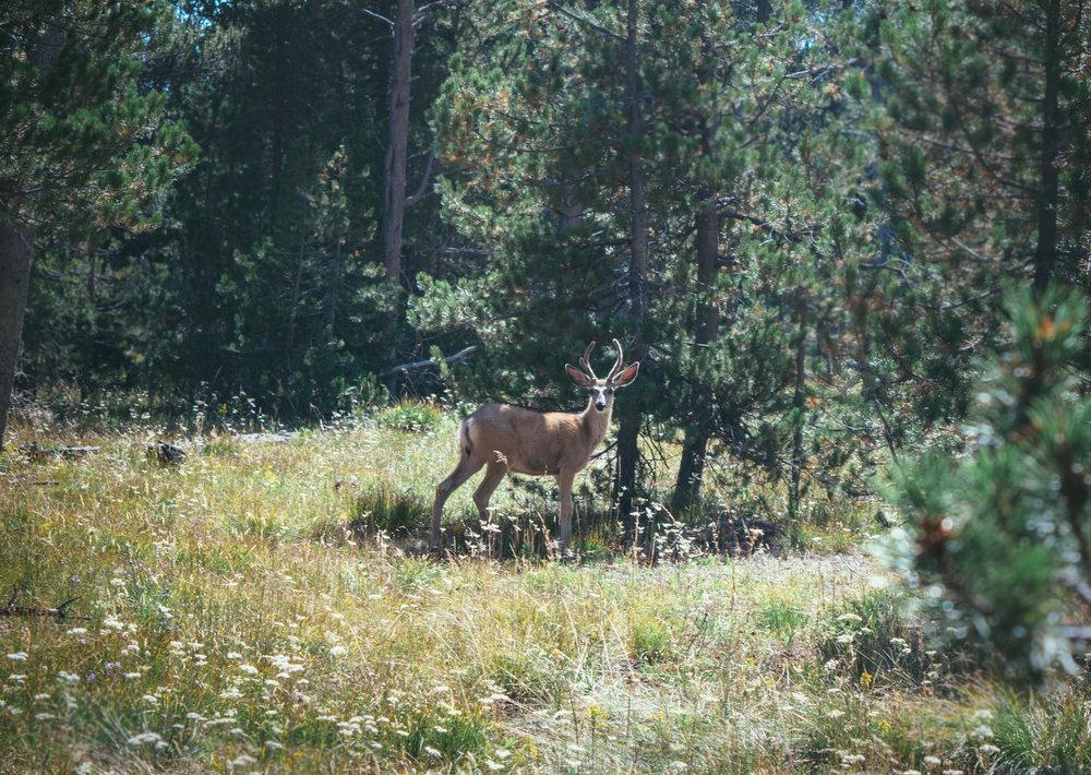 Wyoming-183.jpg
