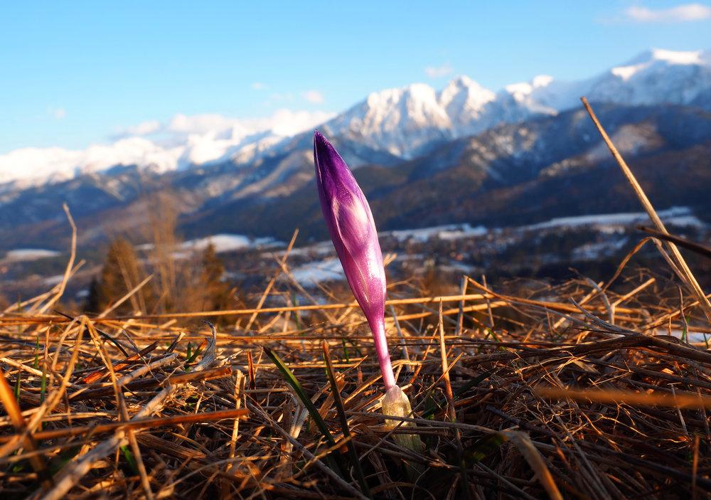 Kwiat-FB.jpg