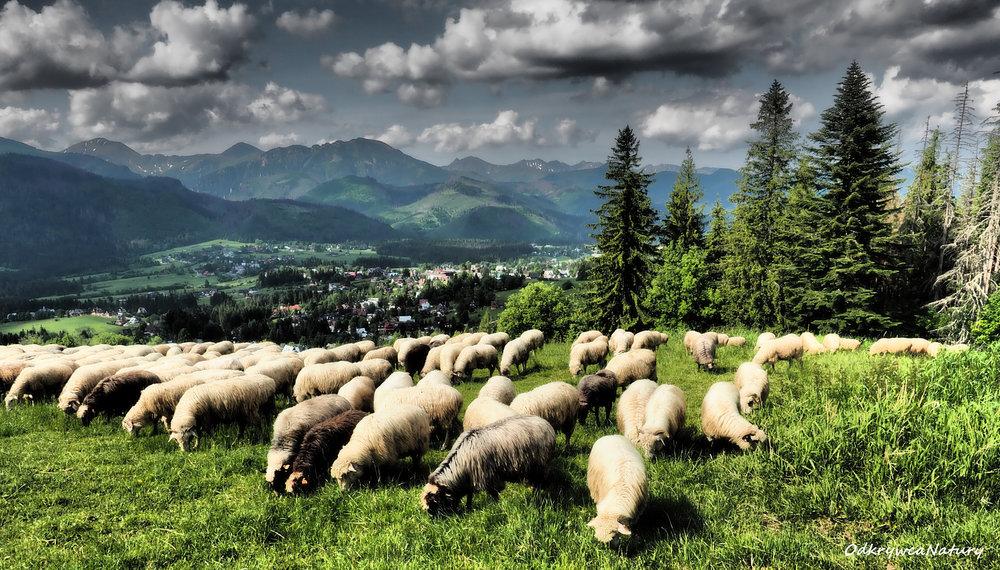 Pastwisko-FB.jpg