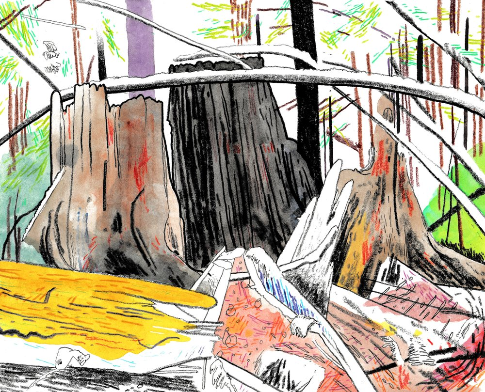 Burns Bog - 8.5'' x 11'' - Watercolor On Paper - 2017