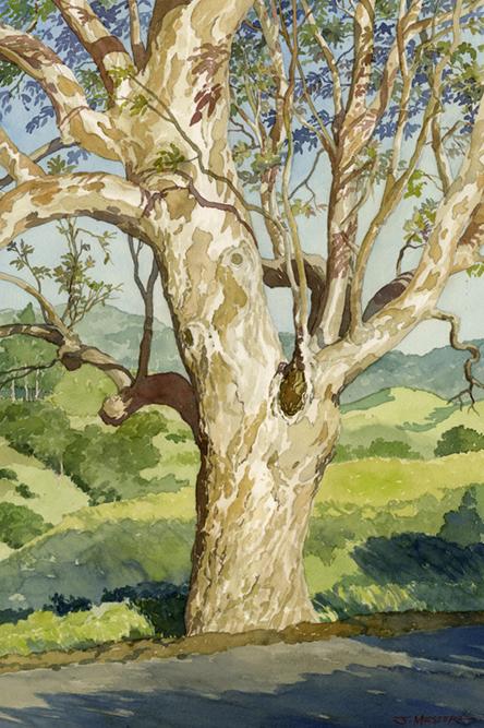 Eucalyptus - 12'' x 18'' - Watercolor on Paper