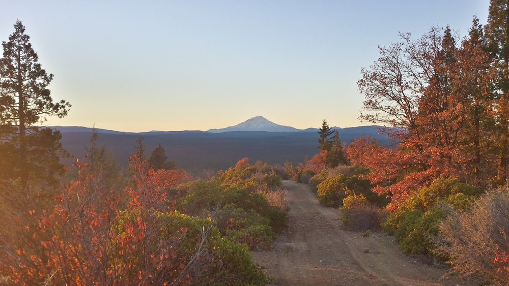Mt. Shasta from Timbered Crater