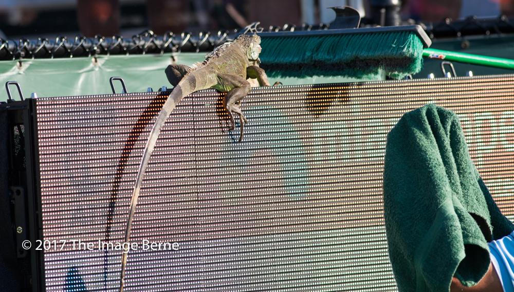 Iguana-188.jpg