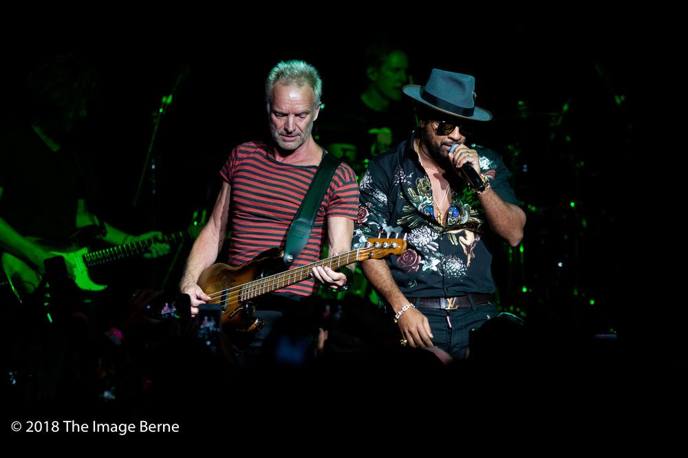 Sting, Shaggy-37.jpg
