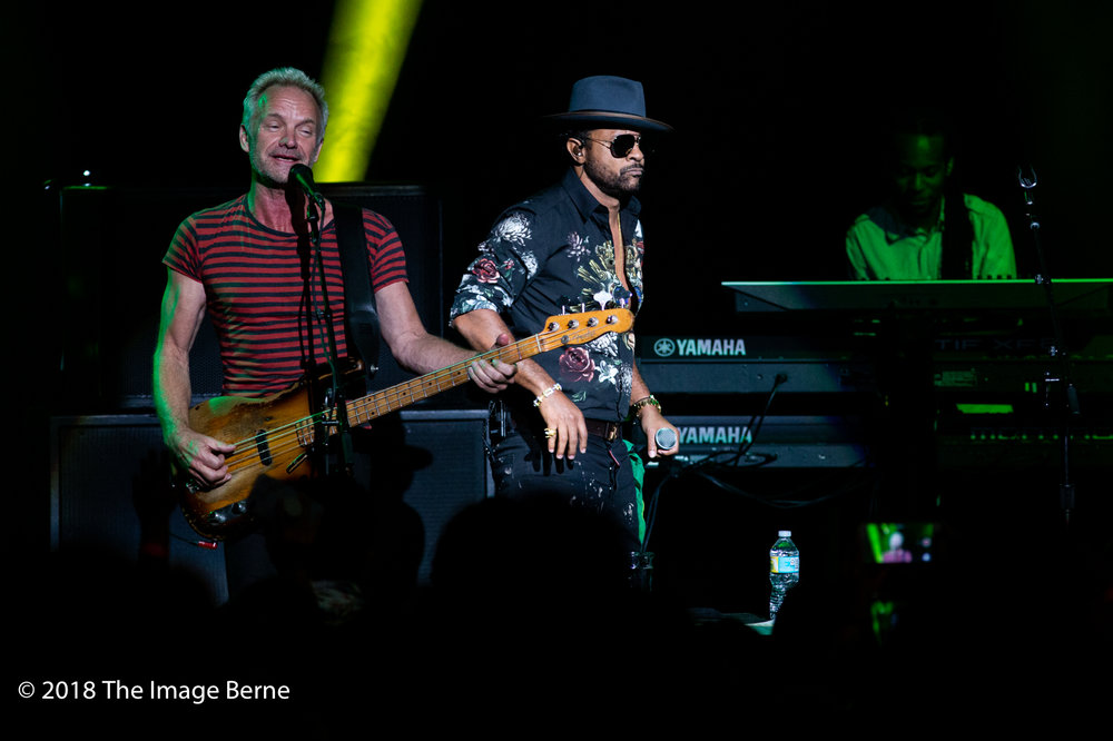 Sting, Shaggy-46.jpg