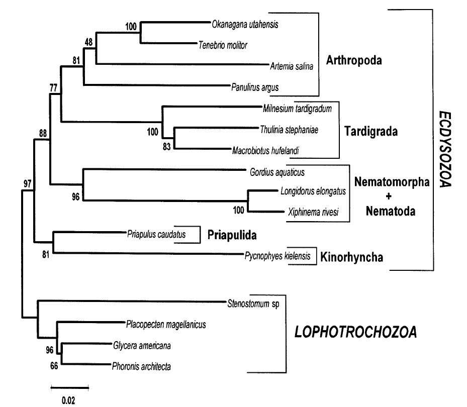 18S tree of the molting animals, ecdysozoa.