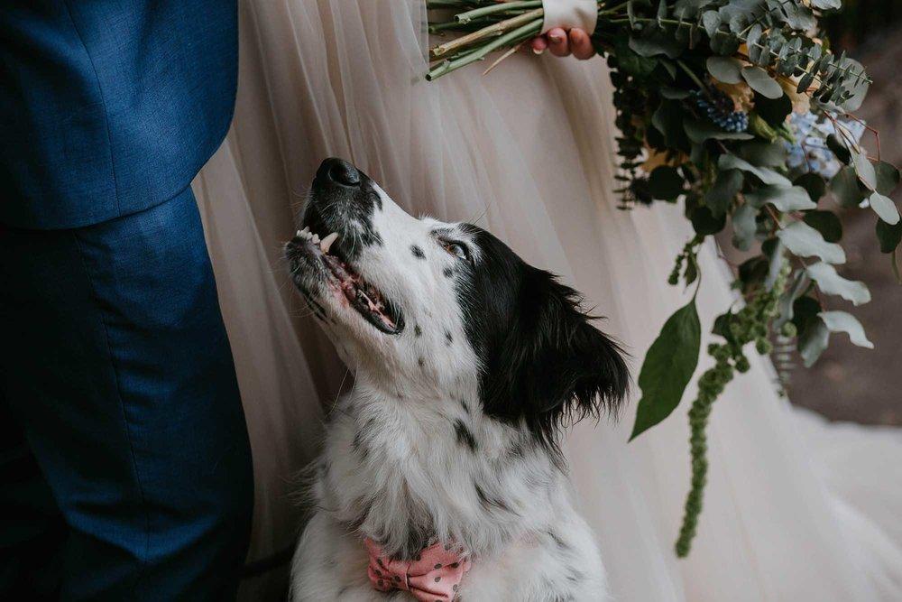 dog friendly wedding venues in Yorkshire