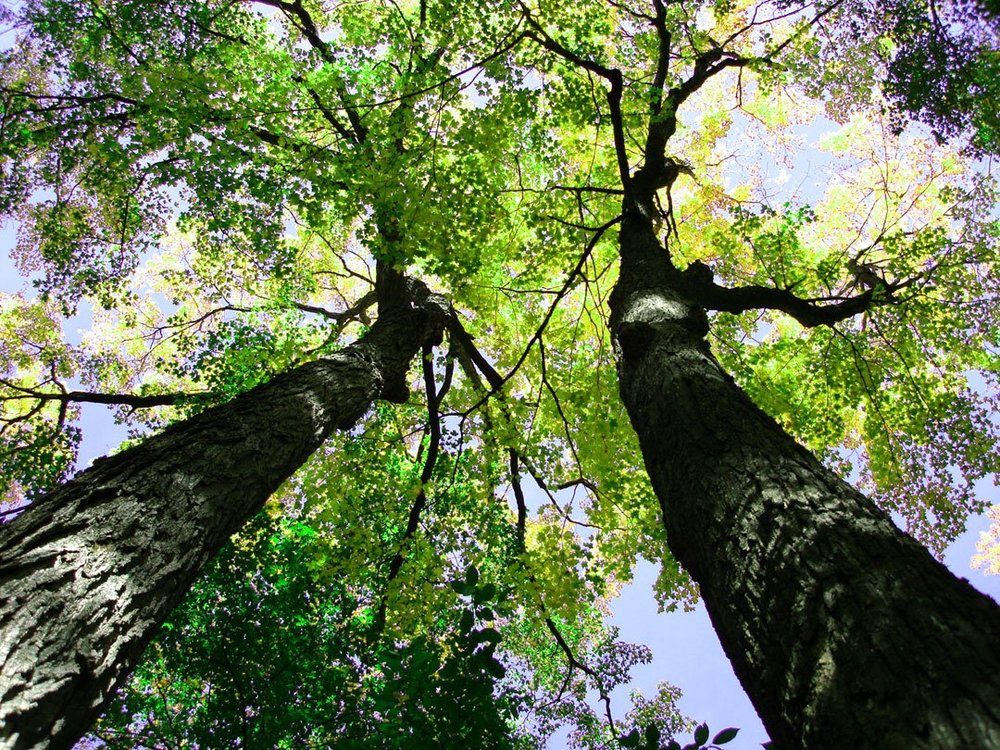 Servicing Those Ecosystems: The Value of Trees   We use ecosystem services provided by nature in our everyday lives, and without much thought. Ecosystem services are characteristics of environmental processes that enable humans...