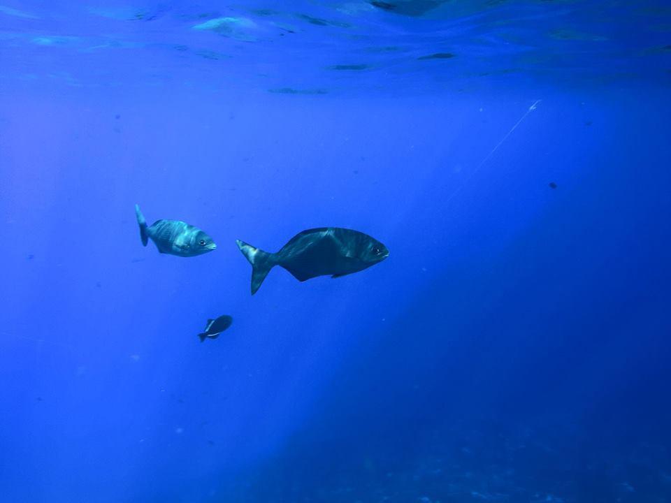 snorkel-molokini-1.jpg