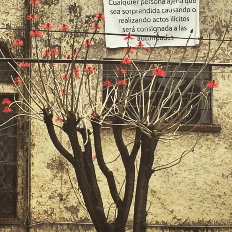 jana lamberti silk art mexico inspiration tree