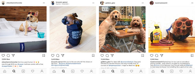 Given the rise of influencer marketing and dog celebrities on Instagram, forays into product placement were perhaps inevitable. -