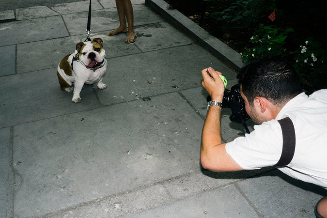 King Bentley, a bulldog with 102,000 followers, modeled a high-tech collar in Bryant Park for an ad shot by Elias Weiss Friedman, better known on Instagram as @TheDogist. - Credit John Taggart for The New York Times