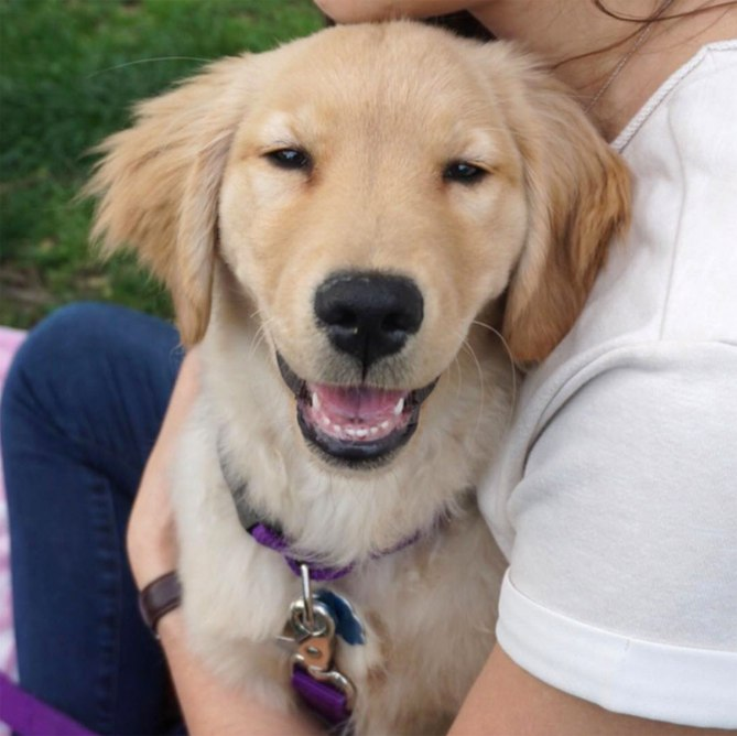 Is there anything better than a golden retriever's smile? Jared Kasner and many others say