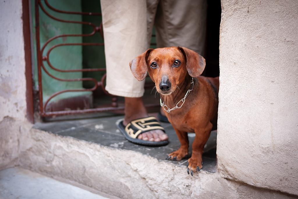 Cuba-Street-Dogs-ginkaville.com-
