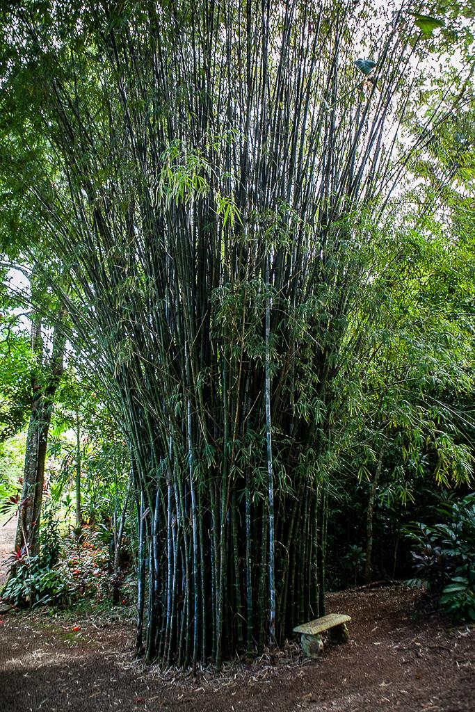 Road-To-Hana-Maui-ginkaville.com--11