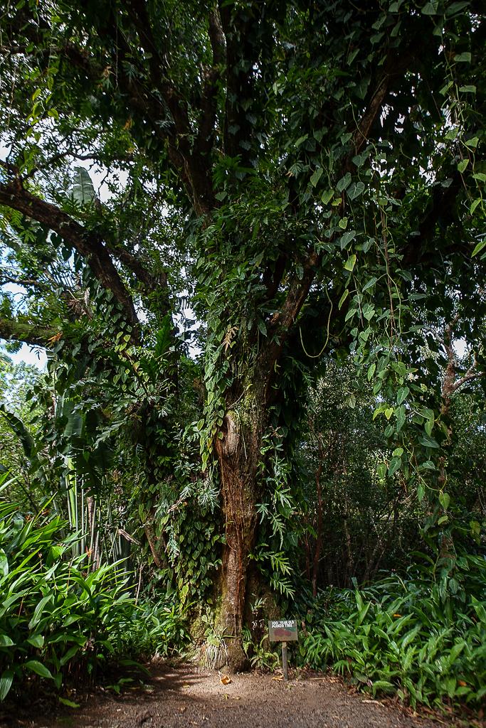 Road-To-Hana-Maui-ginkaville.com--12