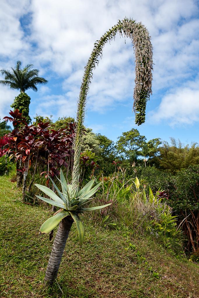 Road-To-Hana-Maui-ginkaville.com--8