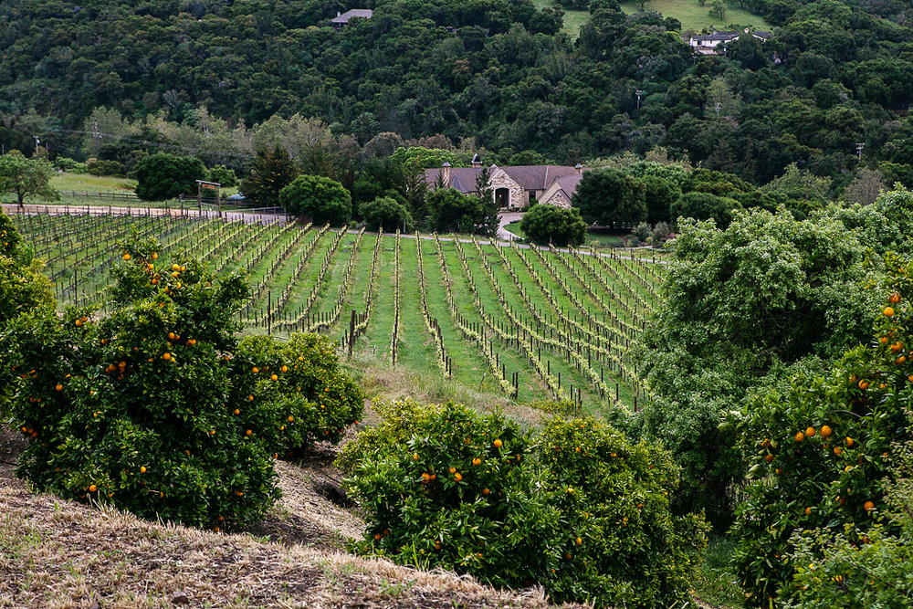 Monterey-Wine-Tour-CaneandSpur-ginkaville.com-5.jpg
