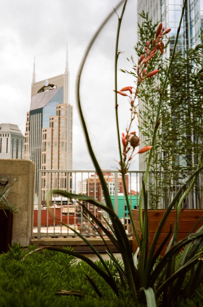 My Month On Medium Format | Medium Format Rangefinder| Shot on Film | Film Photography | Nashville, Tennessee via @ginka + ginkaville.com