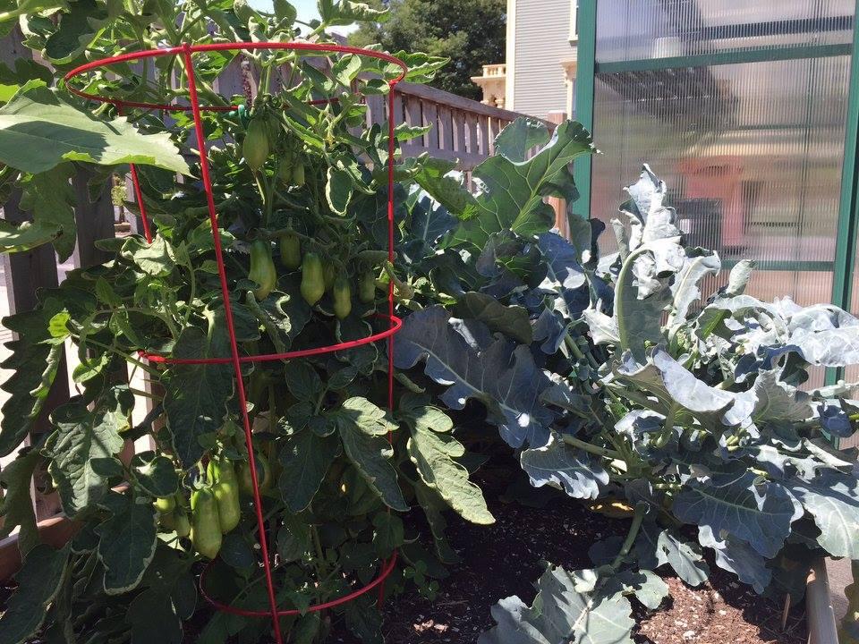 Super plants fed worm tea