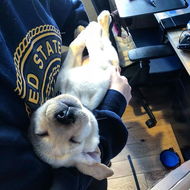 #officevibes 🐶 our new office fur baby Max!