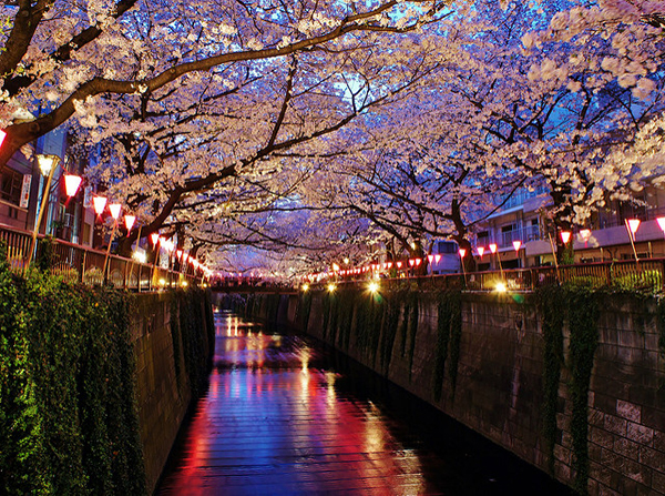 The trees line the Meguro river near Gotanda, making this an optimum location to view cherry blossoms. Image source:  Manish Prabhune  under cc license.