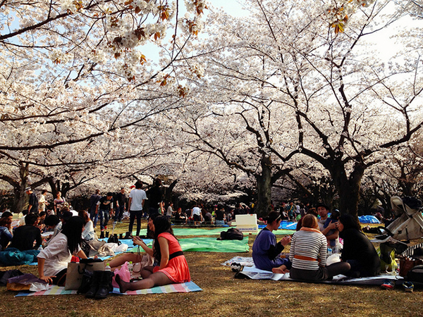 Yoyogi Park is the perfect location to have a picnic to celebrate  hanami.  Image source:  Karl Baron  under cc license
