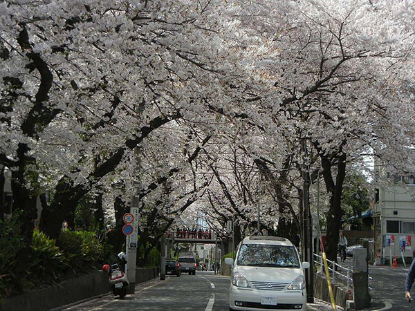 Sakurazaka Park is a lesser known area to view cherry blossoms in the heart of Roppongi. Image Source:  NY066  under cc license