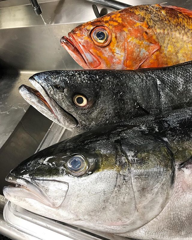 Yellowtail, Rock Cod, and Sea Bass, oh my. #freshfish #seafood #gessoresto