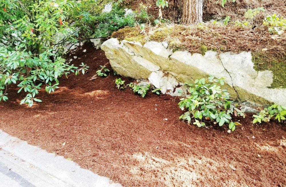 Topdressing with bark mulch