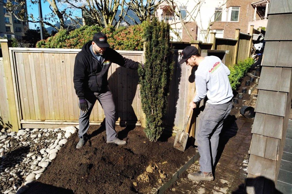 garden renovation project