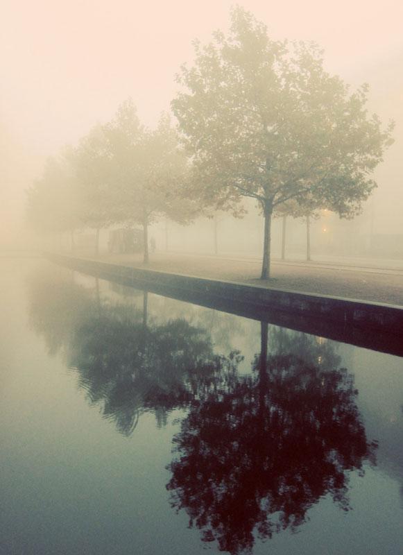 denmark_fogtrees_800.jpg